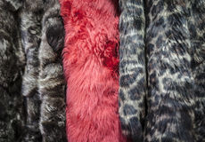 Fur Coats Royalty Free Stock Images