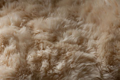 Fur for the cold winter Stock Image