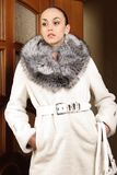 Fur collection Royalty Free Stock Images