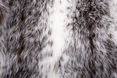 Free Fur Cout Royalty Free Stock Images - 9373289