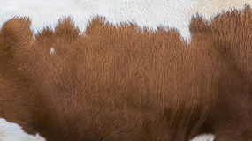 Fur of cow Stock Images