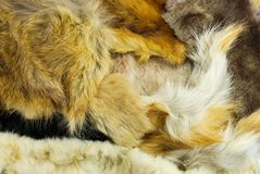Fur of different animals Stock Image