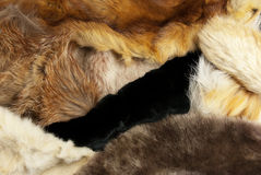 Fur of different animals Stock Photography