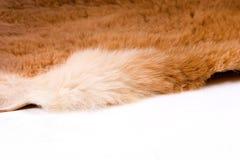 Fur edge. The edge of a kangaroo fur Stock Photography