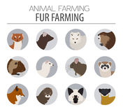 Fur farming. Flat design. Vector illustration Stock Photography