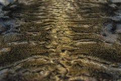 The fur is gray brown karakul lambskin texture, background. The fur is gray brown karakul lambskin texture Stock Photo
