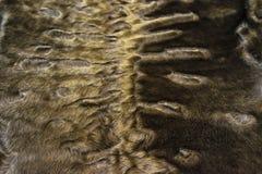 The fur is gray karakul lambskin texture, background. The fur is gray karakul lambskin texture Stock Photo