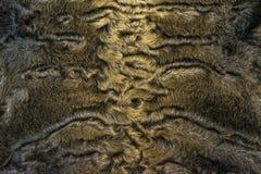 The fur is gray karakul lambskin texture, background. The fur is gray karakul lambskin texture Stock Photos