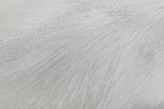 Fur gray or white dog texture abstract for background , Natural animal patterns skin. Close up Fur gray or white dog texture abstract for background , Natural stock images