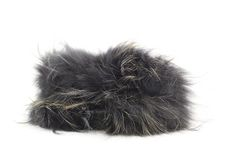 Fur hat isolated Stock Image