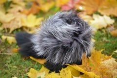 Fur hat Royalty Free Stock Photo