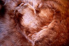 Fur heart. Fur brown heart background close Stock Images