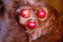 Fur heart with red apples. Close Royalty Free Stock Photo
