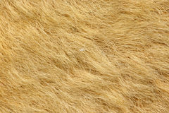 Fur on kangaroo rug Stock Photo