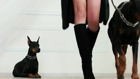 Fur and leather goods, girl wearing black fur coat suede boots on high heels walks away with doberman