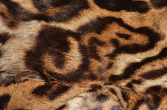 Fur of leopard Stock Photo
