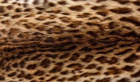 Fur with leopard print. Background royalty free stock photos