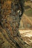 Fur marine sediment clay minerals, Fur Island, Denmark. Fur formation, marine sediment made of diatoms and clay minerals, Palaeocene-Eocene, Fur Island, Denmark stock photos