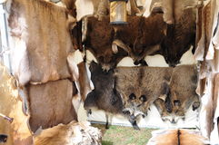 Fur market. Fur of different wild animals - boars, roedeer, hind, deer - for sale at a market stock photo