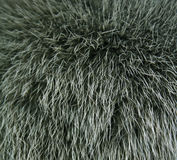 The fur of a mink can as background Stock Photography