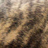 Fur pattern. Striped blue brindle and fawn dog fur Stock Photography