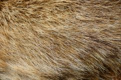 Fur of rabbit. A part of brown fur of a rabbit Royalty Free Stock Images