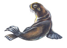 Fur Seal Royalty Free Stock Images