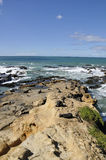 Fur Seal on Rocks, New Zealand. Fur Seal colony Near Dunedin, Otago, New Zealand Royalty Free Stock Photo