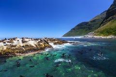 Fur seals on Duiker Island. Republic of South Africa. Duiker Island Seal Island near Hout Bay Cape Peninsula, Cape Town. Cape fur seal colony Arctocephalus Stock Image