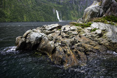 Fur Seals, Milford Sound, Fiordland National Park, South Island, New Zealand Stock Photos