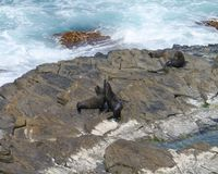 Fur seals on the rocks of Kangaroo island in Australia Stock Photo