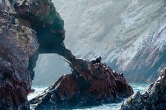 Fur seals (sea lions) sunbathing on the Ballestas Islands red cliffs, in Peru Stock Image