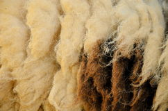 Fur of sheep Stock Images