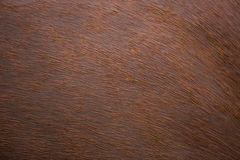 Fur skin of horse Stock Images