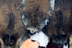 Free Fur Skins Royalty Free Stock Photos - 7658048