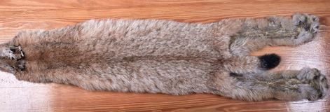 Fur skins of Siberian lynx on wooden background. Not dressed. Average size Royalty Free Stock Photography