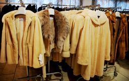 Fur store Stock Image