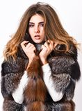 Fur store model enjoy warm in soft fluffy coat with collar. Fur fashion concept. Woman makeup and hairstyle posing mink. Or sable fur coat. Winter elite luxury stock image