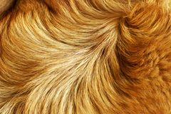 Fur structure Stock Photo