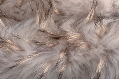 Fur structure Royalty Free Stock Images