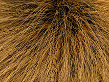 Fur texture. Beautiful 3d brown fur texture Royalty Free Stock Photo