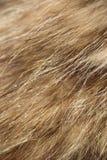 Fur texture stock photos
