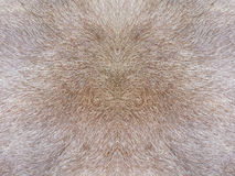 Fur texture. Close-up of reindeer fur for texture or backgroud Royalty Free Stock Photo