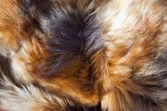 Fur texture. Close up of an animal colored fur texture Stock Photo