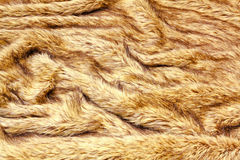 Fur texture Royalty Free Stock Photography