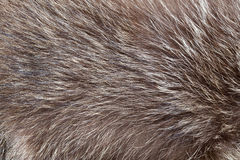Fur texture. Close up fur texture to background Stock Photos