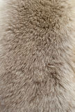 Fur texture Royalty Free Stock Photo