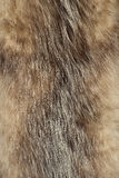 Fur texture Royalty Free Stock Image