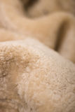 Fur texture. Of household sheep Stock Images