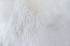 Fur texture as background Royalty Free Stock Images